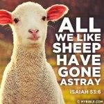 Gone Astray Lamb
