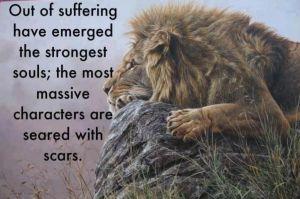 Lion scars
